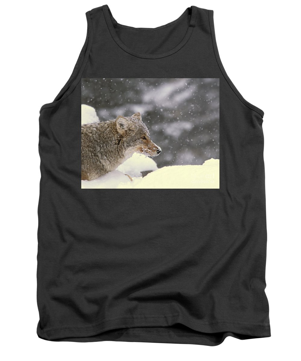 Coyote Tank Top featuring the photograph Frosty Coyote by Gary Beeler