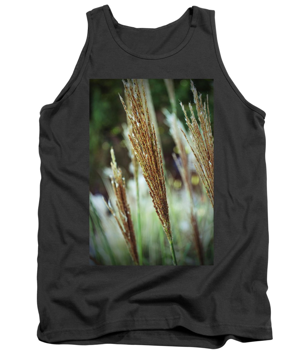 Gold Golden Reeds Green Yellow Brown Plant Landscape California Chico Tank Top featuring the photograph Golden Reeds by Holly Blunkall