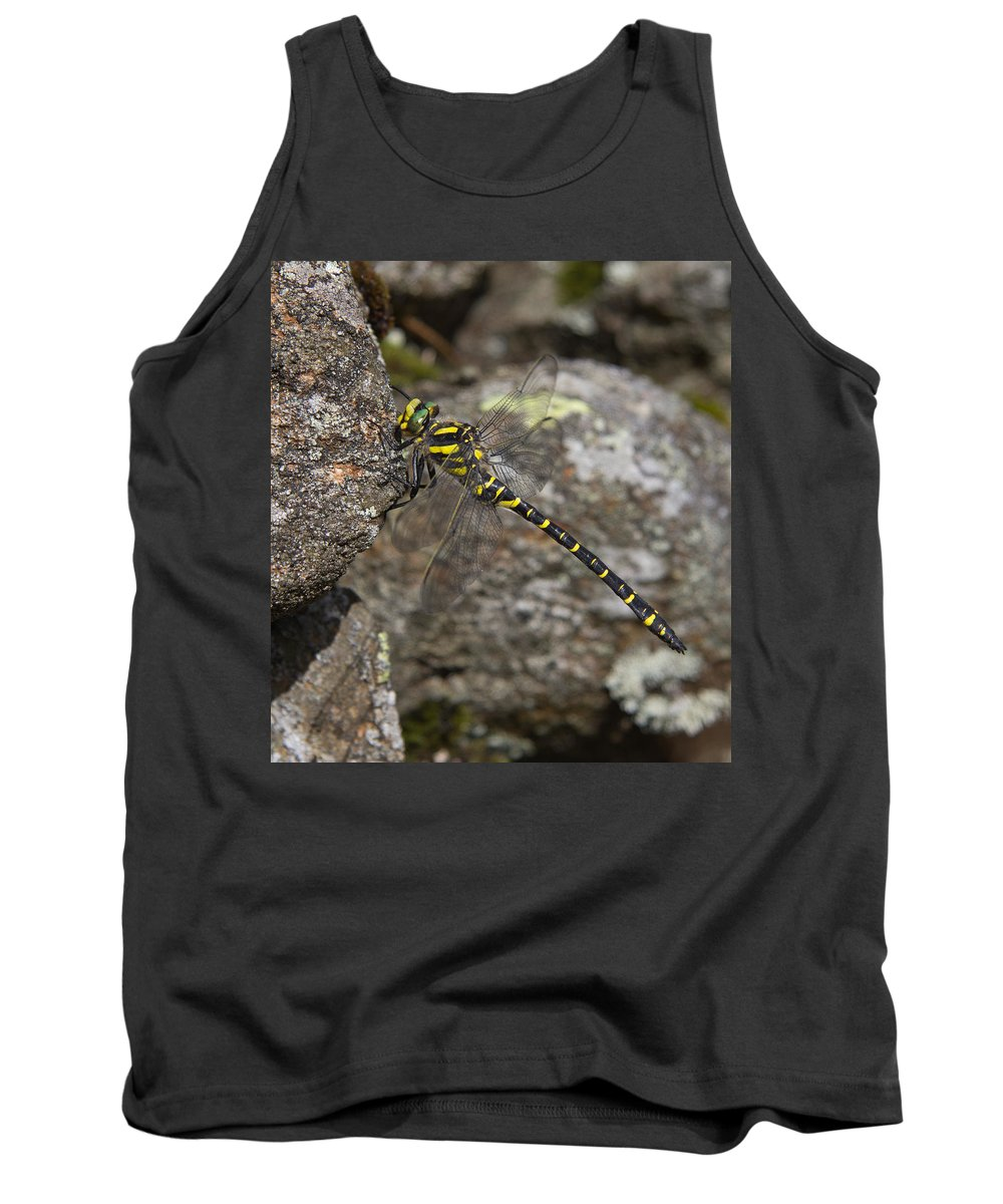 Haweswater Tank Top featuring the photograph Golden-ringed Dragonfly by Kathryn Bell
