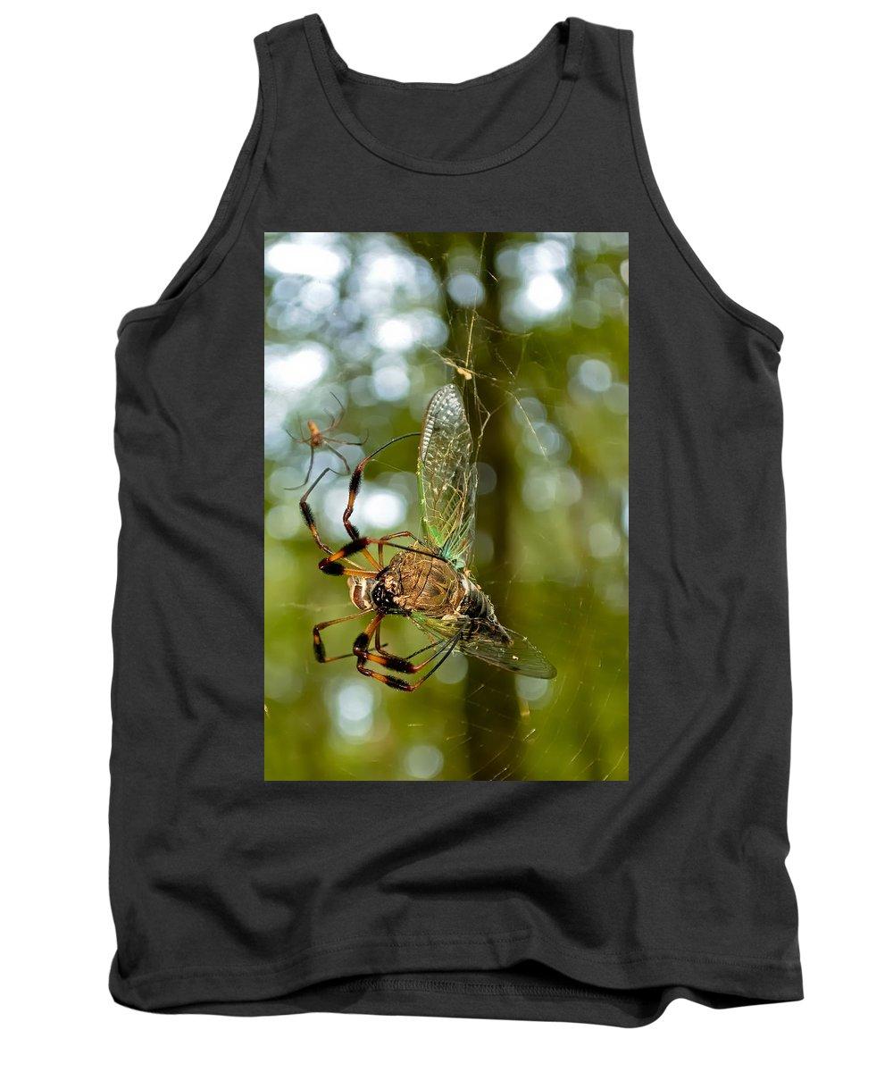 Chattahoochee Tank Top featuring the photograph Golden Silk Spider by Rich Leighton