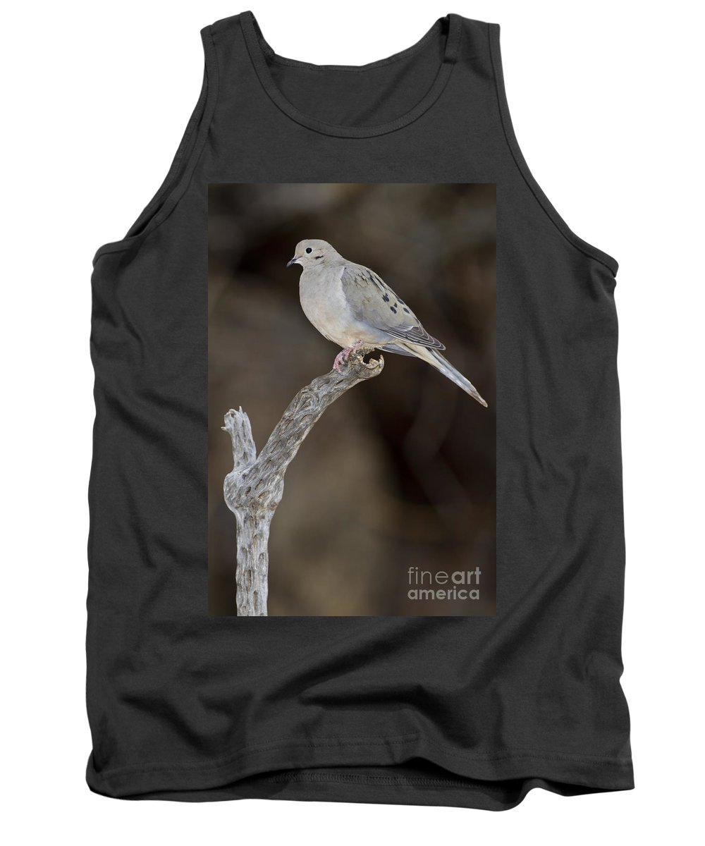 Dove Tank Top featuring the photograph Good Mourning by Bryan Keil