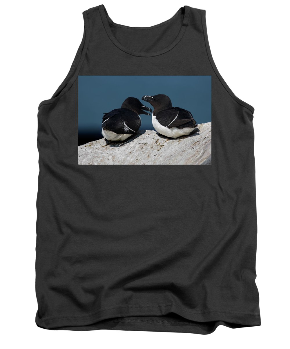 Razorbill Tank Top featuring the photograph Gossip Mongers by Brent L Ander