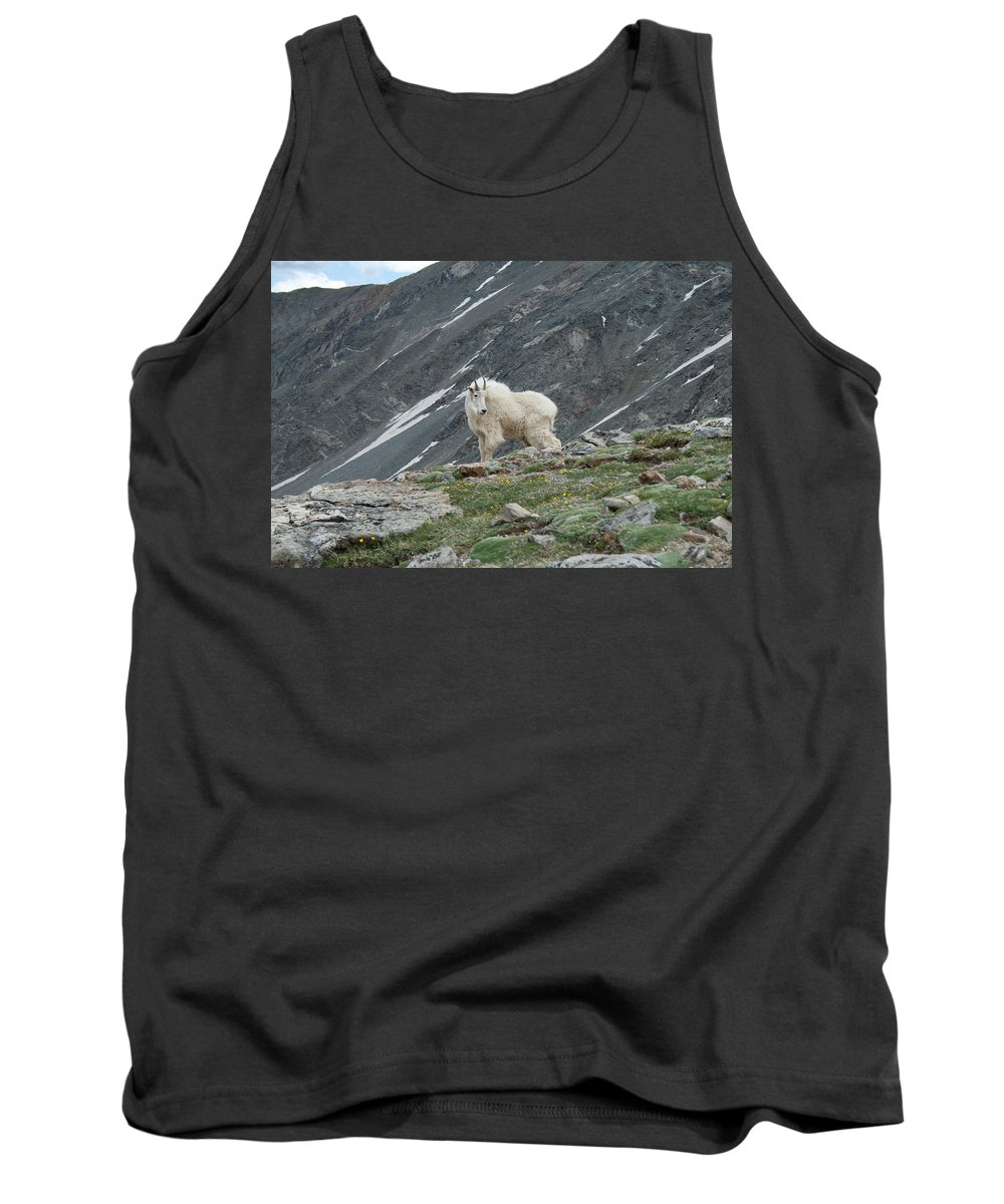 Mountain Goat Tank Top featuring the photograph Gq Mtn. Goat by Angus Hooper Iii