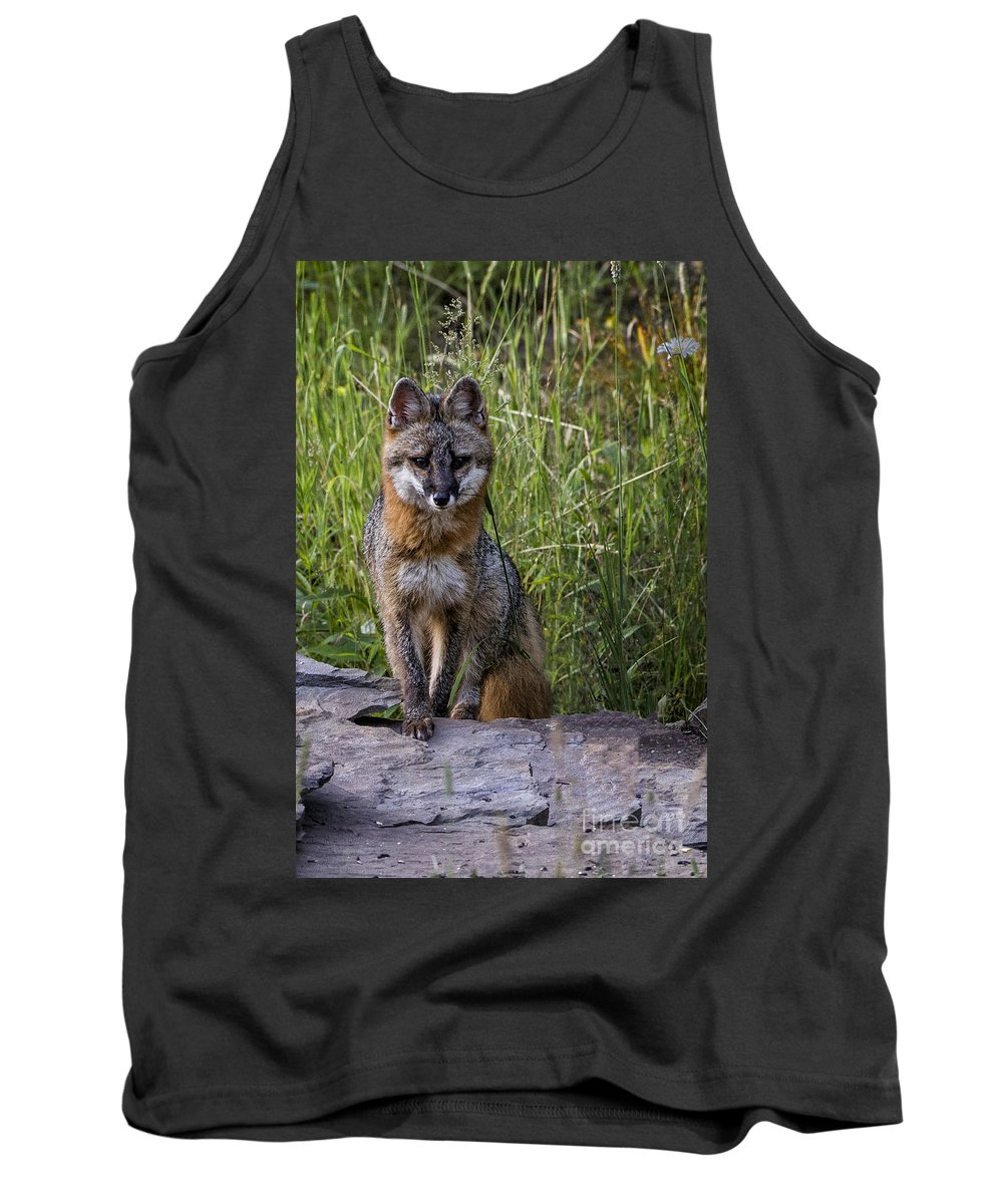 Gray Fox Tank Top featuring the photograph Gray Fox Posing by Ronald Lutz