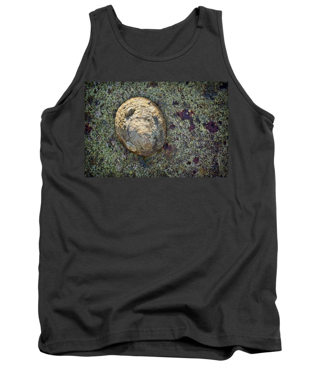 Shells Tank Top featuring the photograph Great Owl Limpet by Kelley King
