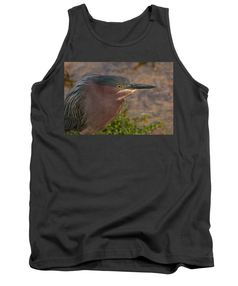 Heron Tank Top featuring the photograph Green Heron by Paul Rebmann