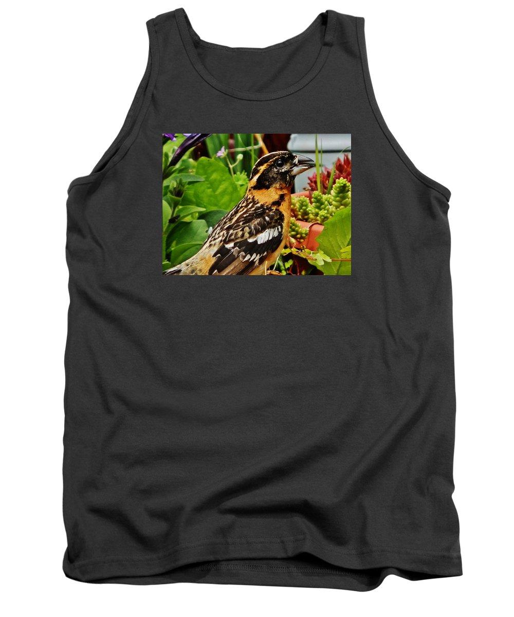 Bird Tank Top featuring the photograph Grosbeak Profile by VLee Watson