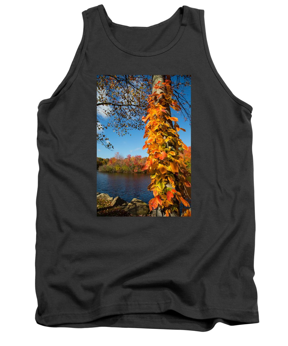 Growing Colors Tank Top featuring the photograph Growing Colors by Karol Livote