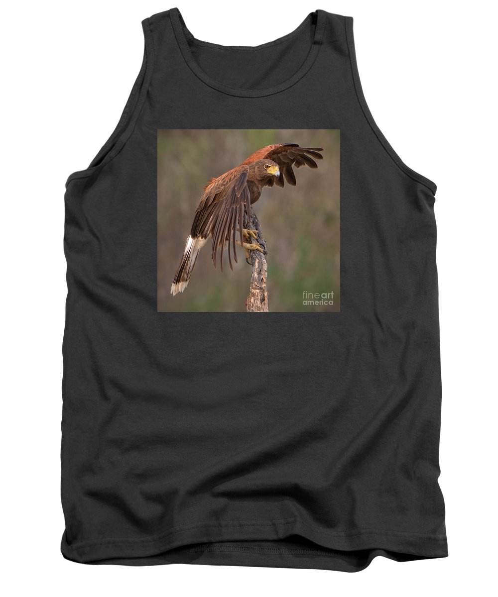 Harris's Hawk Tank Top featuring the photograph Harris's Hawk 1 by Jerry Fornarotto