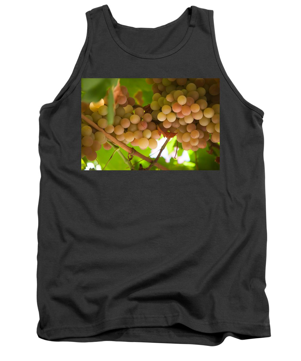 Grape Tank Top featuring the photograph Harvest Time. Sunny Grapes II by Jenny Rainbow