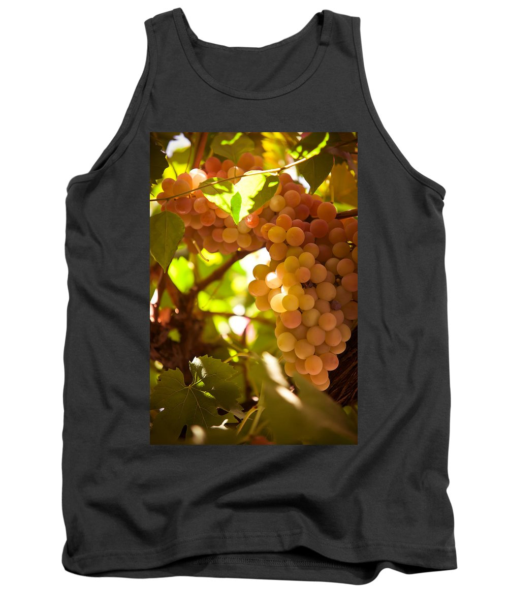 Grape Tank Top featuring the photograph Harvest Time. Sunny Grapes IIi by Jenny Rainbow