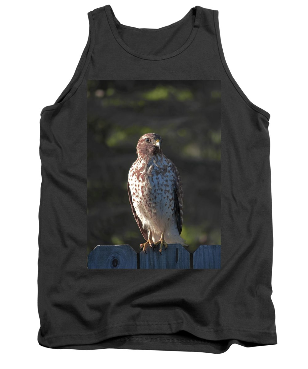Hawk Tank Top featuring the photograph Heartful Hawk by DigiArt Diaries by Vicky B Fuller