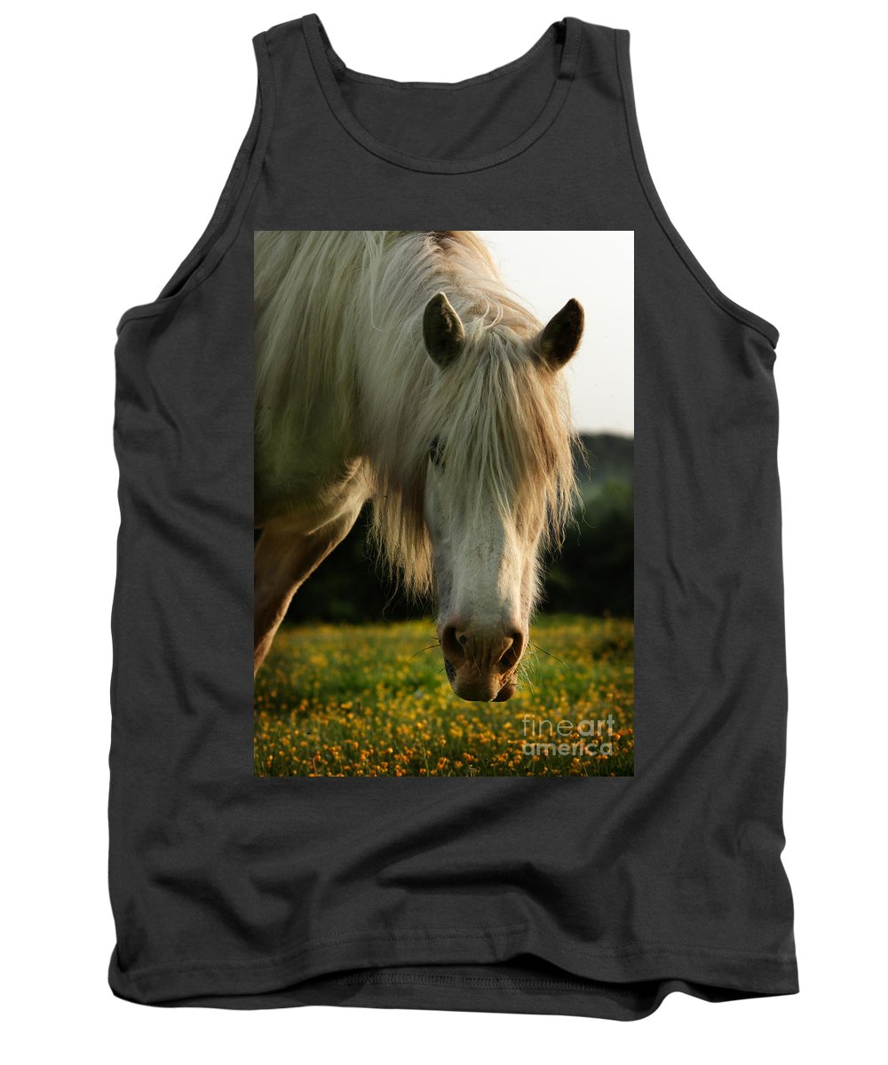 Grey Horse Tank Top featuring the photograph Hello Mate by Angel Ciesniarska