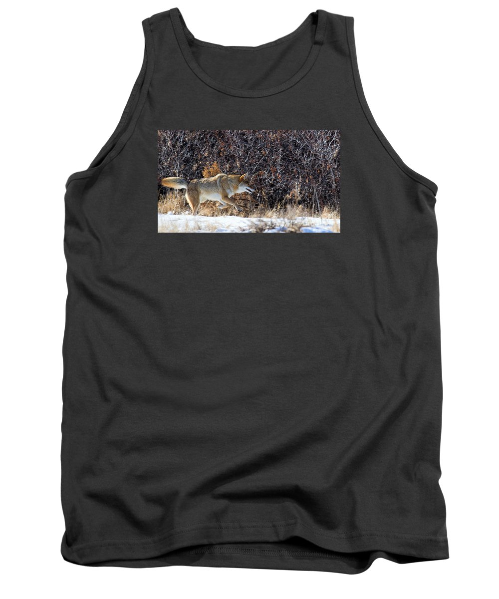 Coyote Tank Top featuring the photograph Hide Your Piggies by Jim Garrison