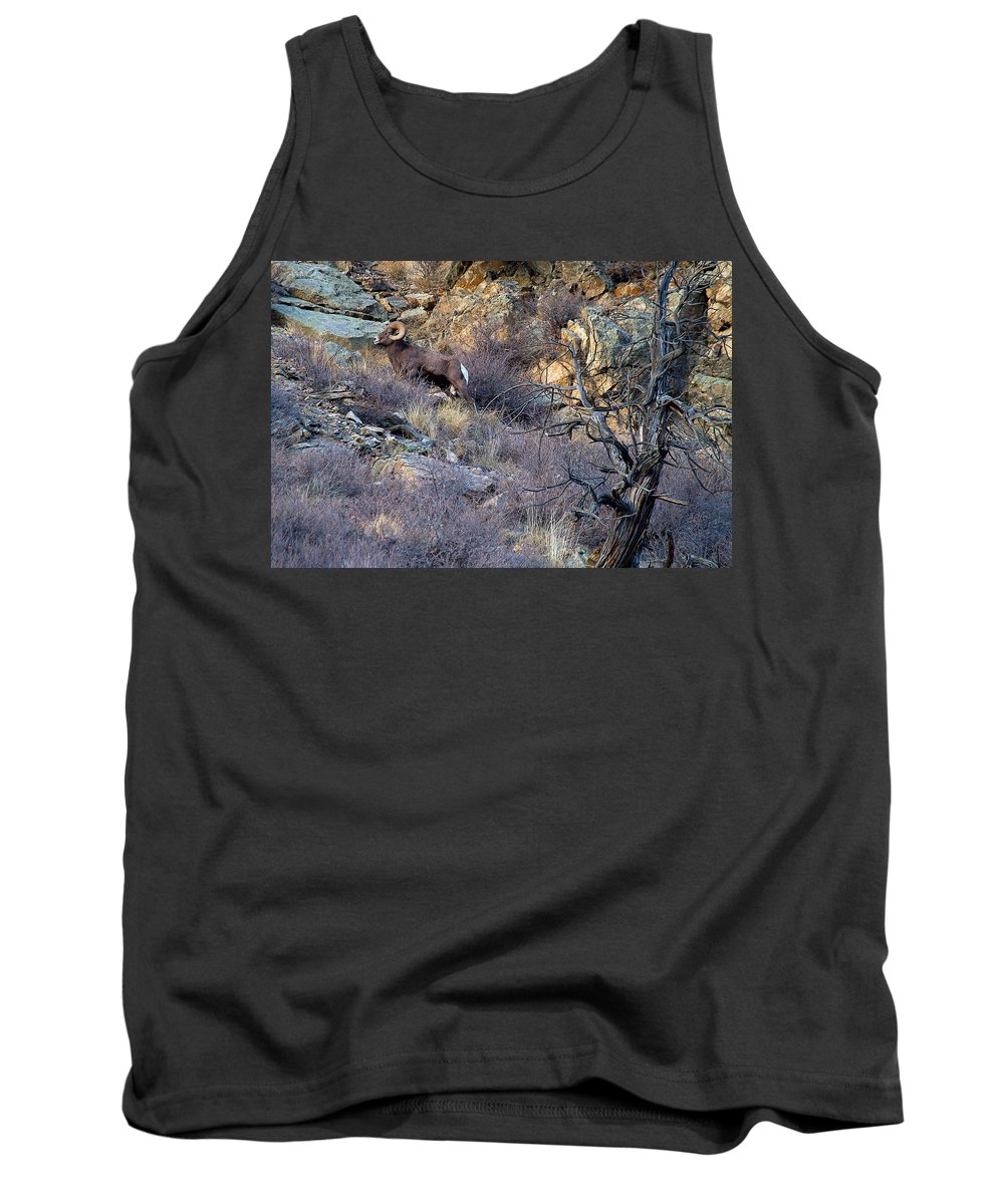 Bighorn Sheep Tank Top featuring the photograph Higher Ground by Jim Garrison