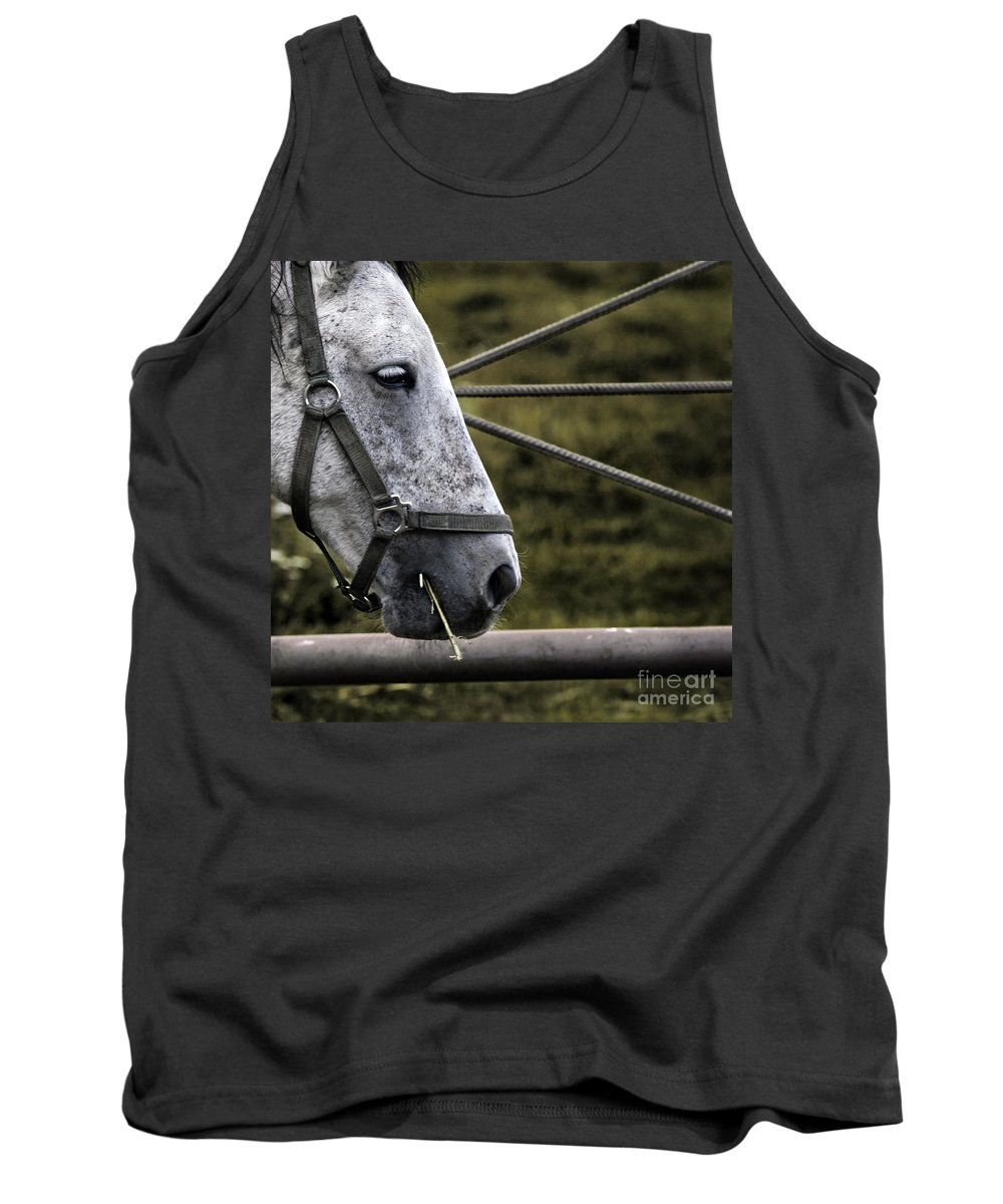 Horse Tank Top featuring the photograph Horse's Head by Angel Ciesniarska