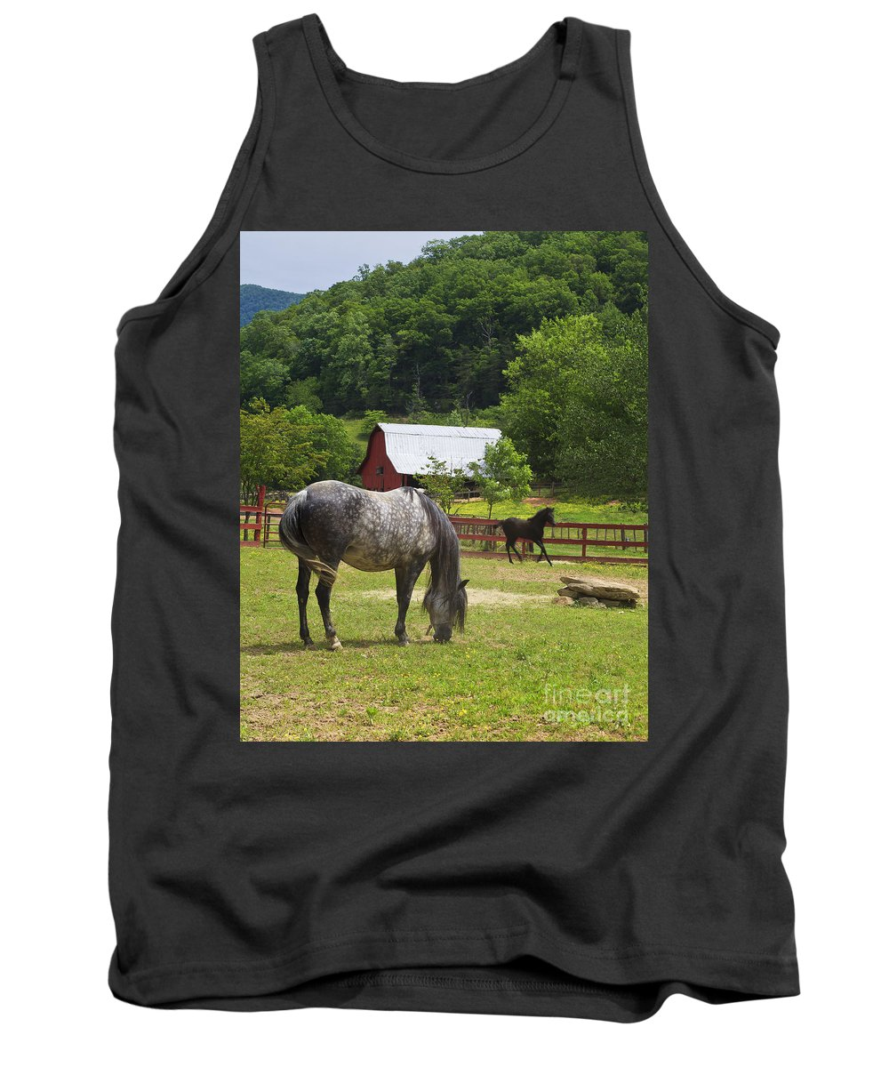 Paso Tank Top featuring the photograph Horses On A Farm by Jill Lang