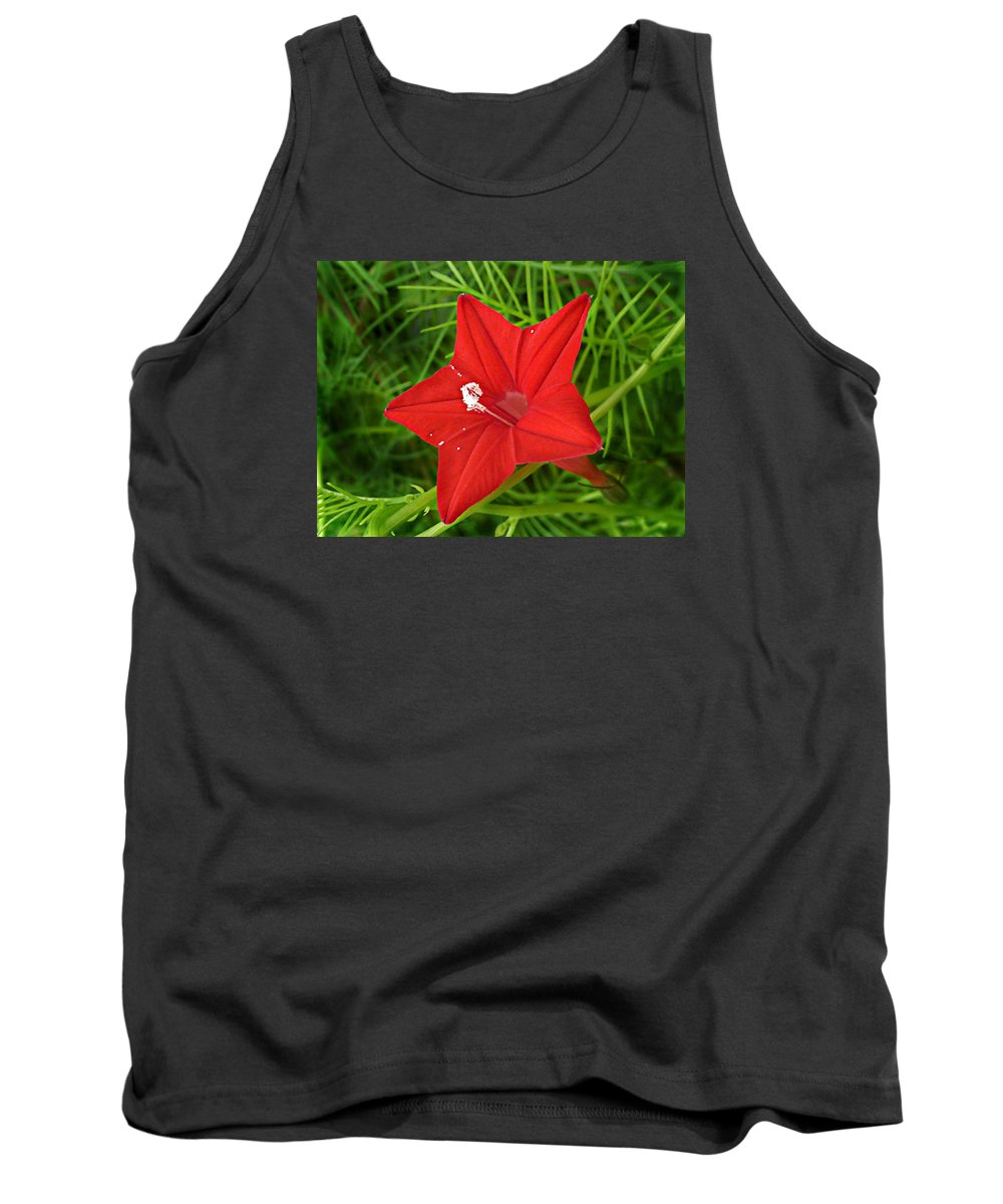 Ipomoea Quamoclit Tank Top featuring the photograph Hummingbird Vine by William Tanneberger