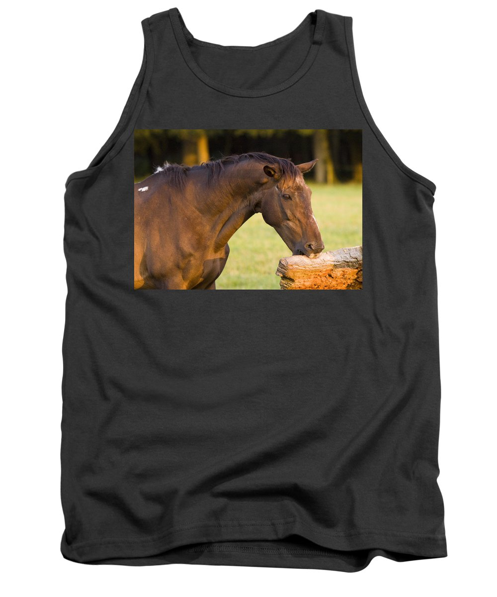 Pony Tank Top featuring the photograph Hungry by Angel Ciesniarska
