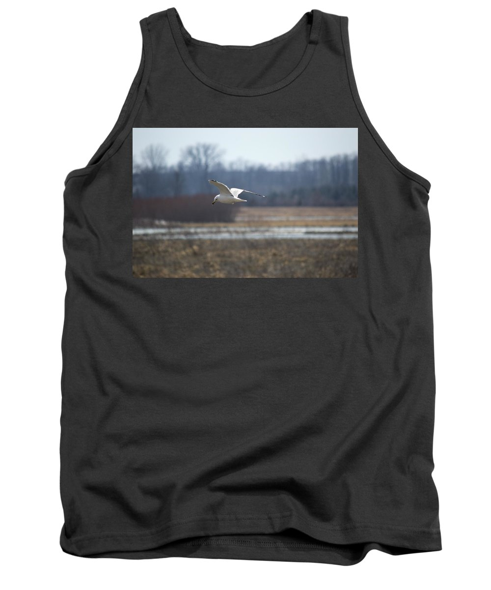 Gull Tank Top featuring the photograph Hunting For Scraps by Bonfire Photography