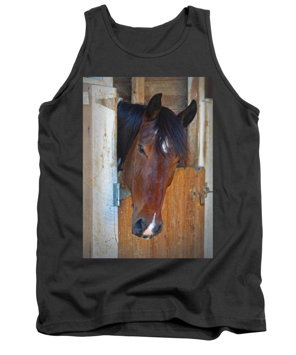 Horse Tank Top featuring the photograph I Was Waiting For You by Sandi OReilly