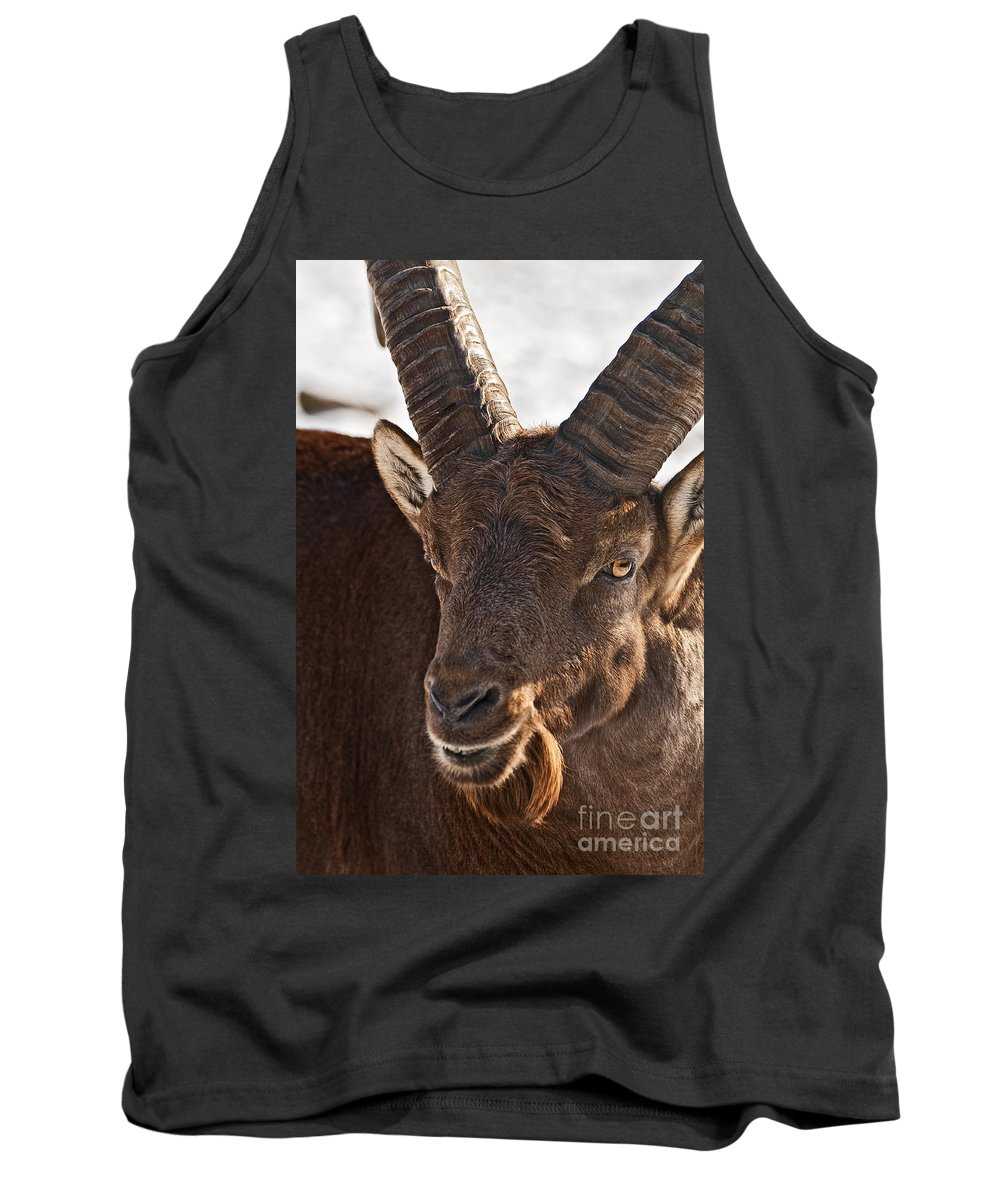 Ibex Tank Top featuring the photograph Ibex Pictures 169 by World Wildlife Photography