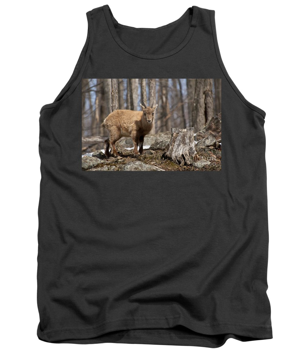 Ibex Tank Top featuring the photograph Ibex Pictures 92 by World Wildlife Photography