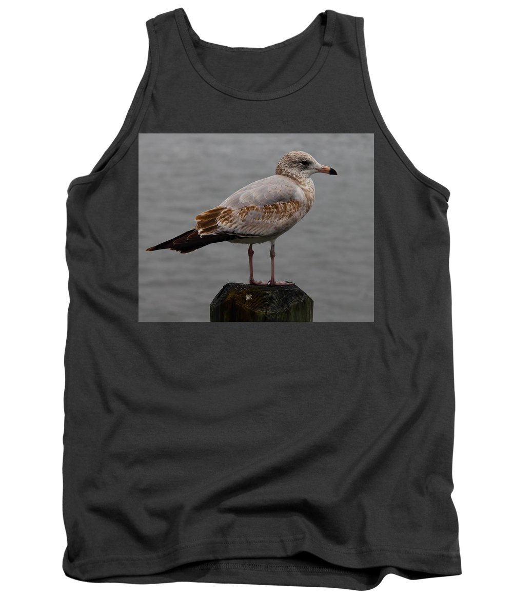 Bird Tank Top featuring the photograph Immature Glaucous Gull by Denise Mazzocco