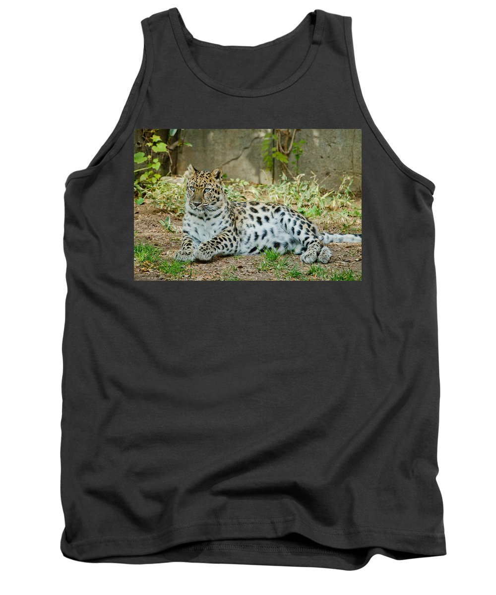 Cat Tank Top featuring the photograph In The Eyes by Trish Tritz