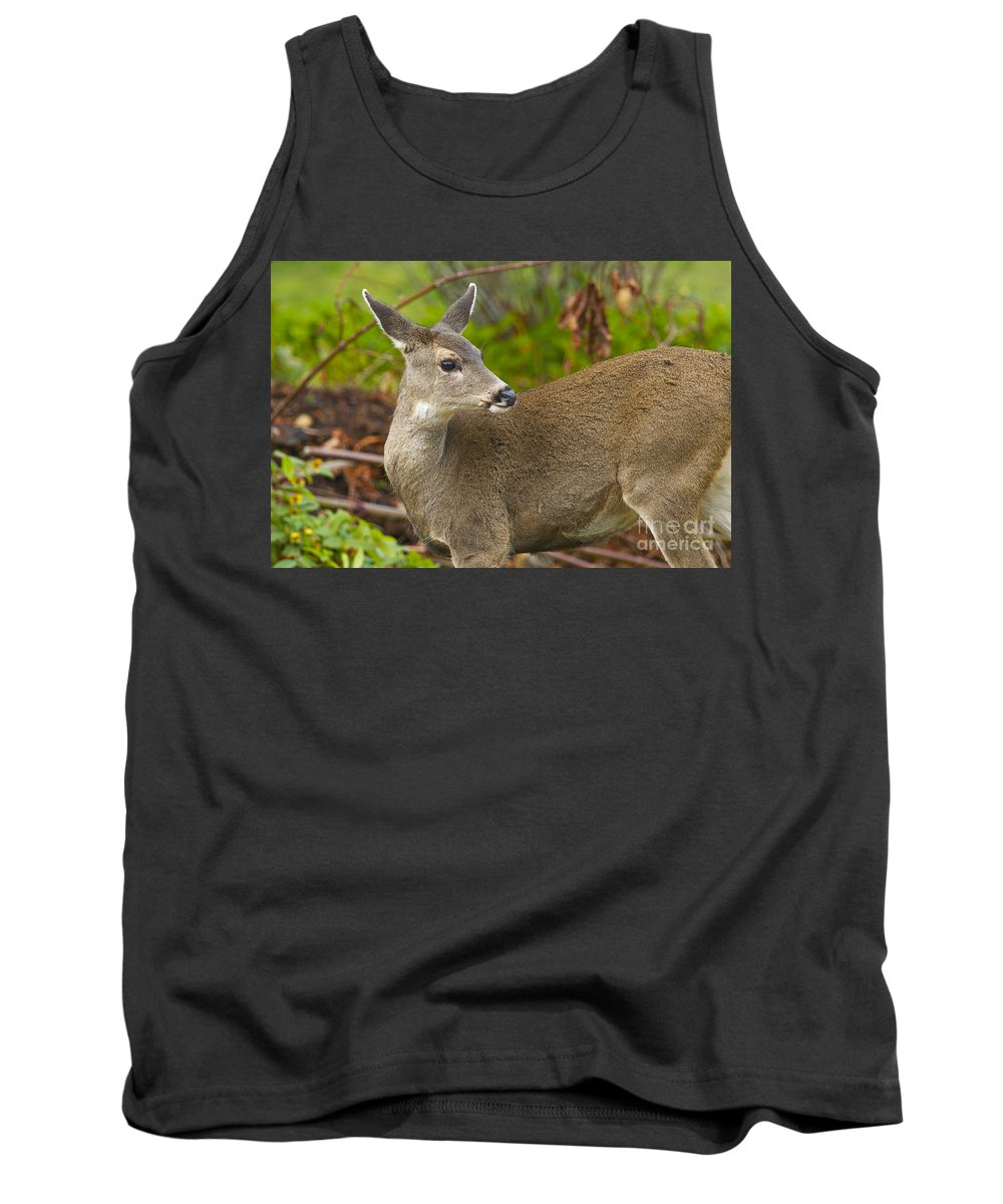 Deer Tank Top featuring the photograph In The Woods by Sharon Talson