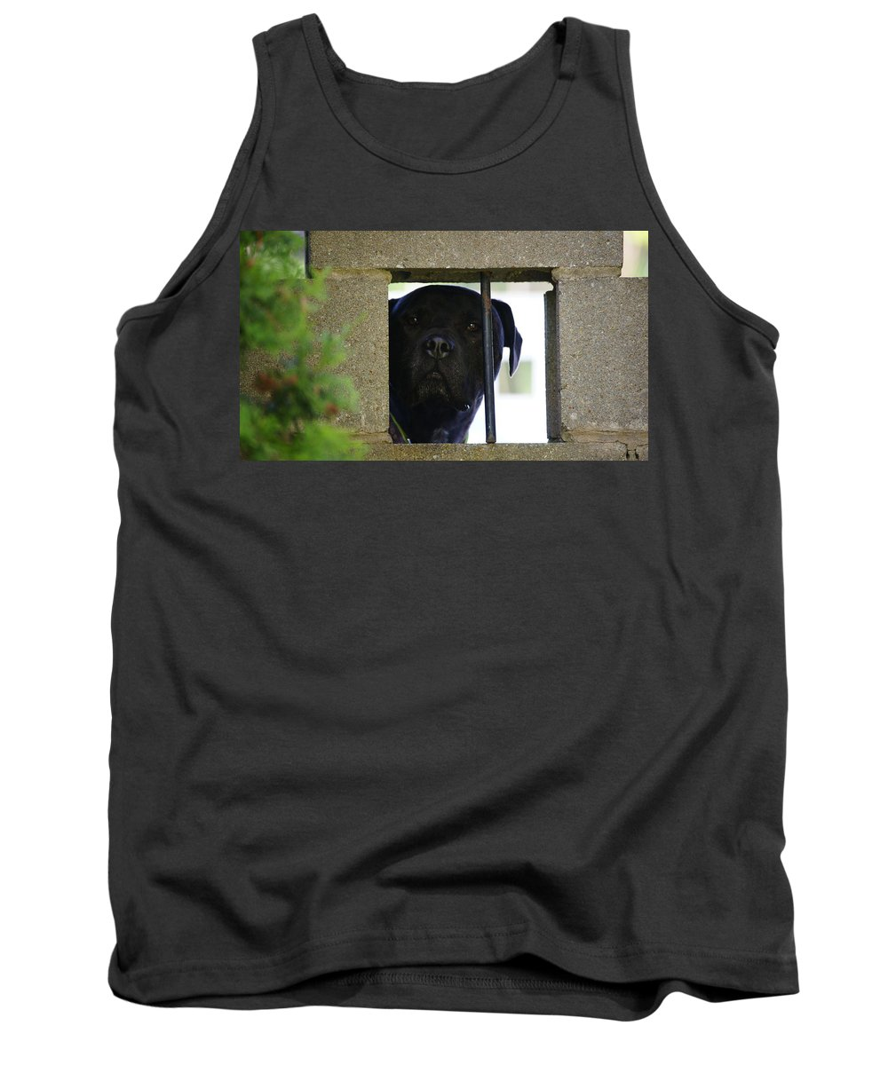 Grey Tank Top featuring the photograph Jailed by Crystal Harman