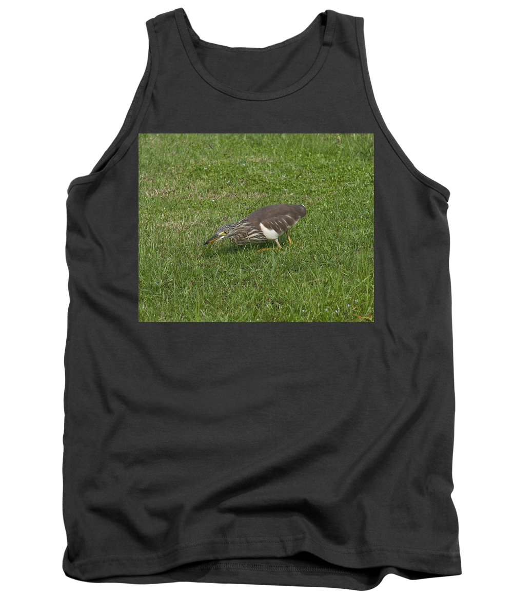 Nature Tank Top featuring the photograph Javan Pond Heron Sneaking Dthn0067 by Gerry Gantt