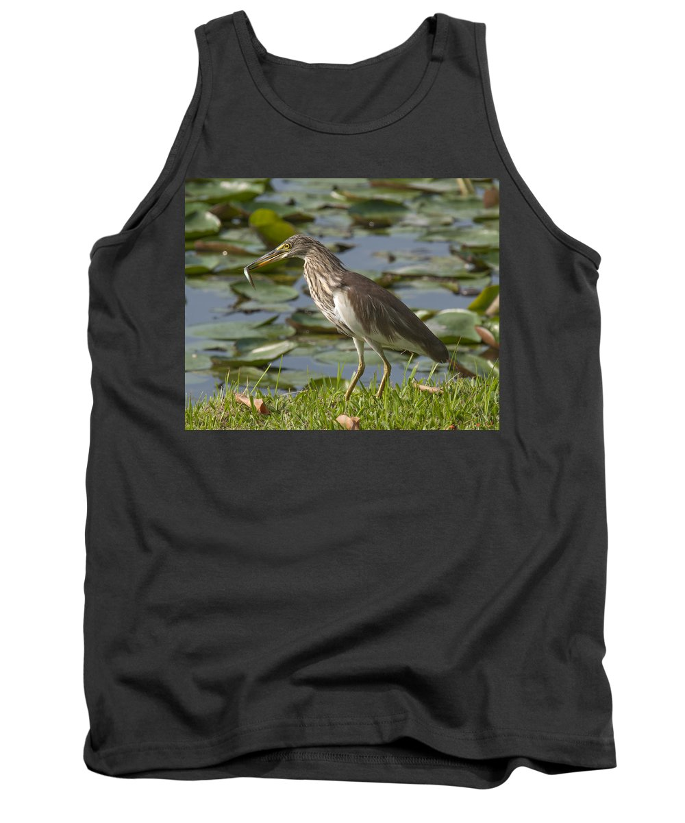 Nature Tank Top featuring the photograph Javan Pond Heron With A Fish Dthn0069 by Gerry Gantt