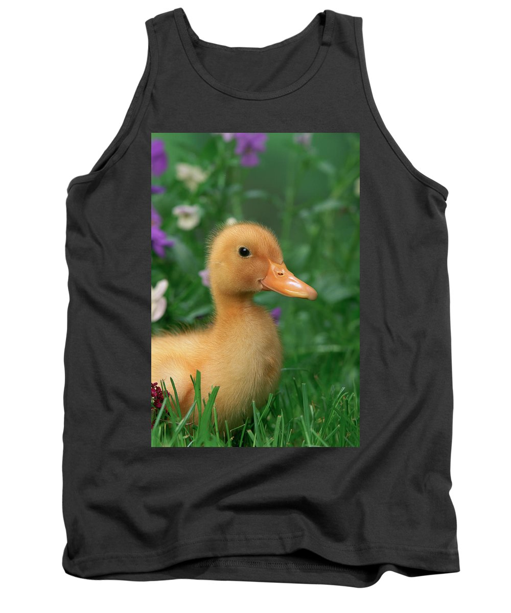 Agriculture Tank Top featuring the photograph Kitchin & Hurst, Domestic Farm by First Light