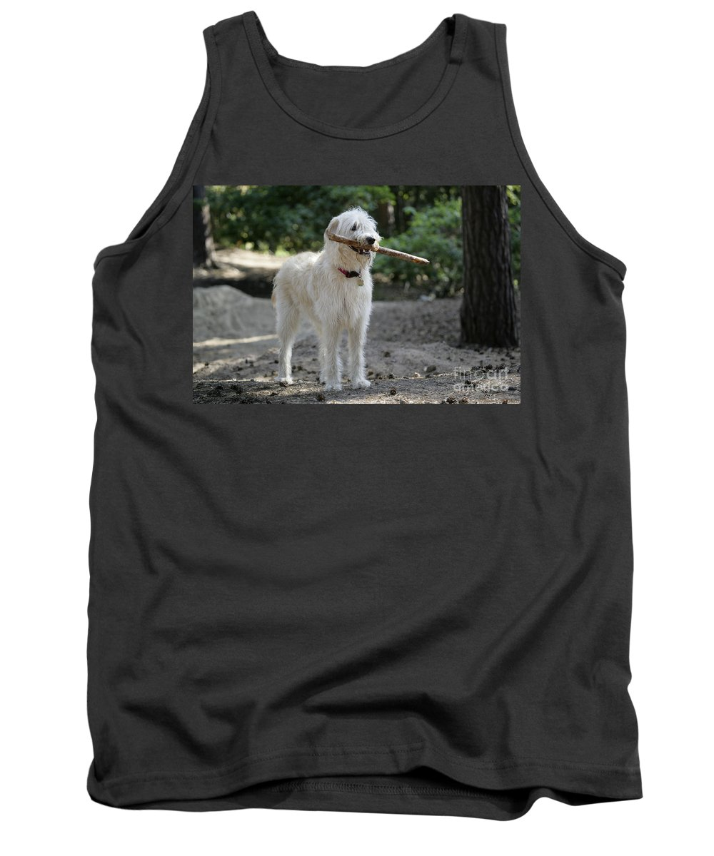 Labradoodle Tank Top featuring the photograph Labradoodle Holding Stick by John Daniels