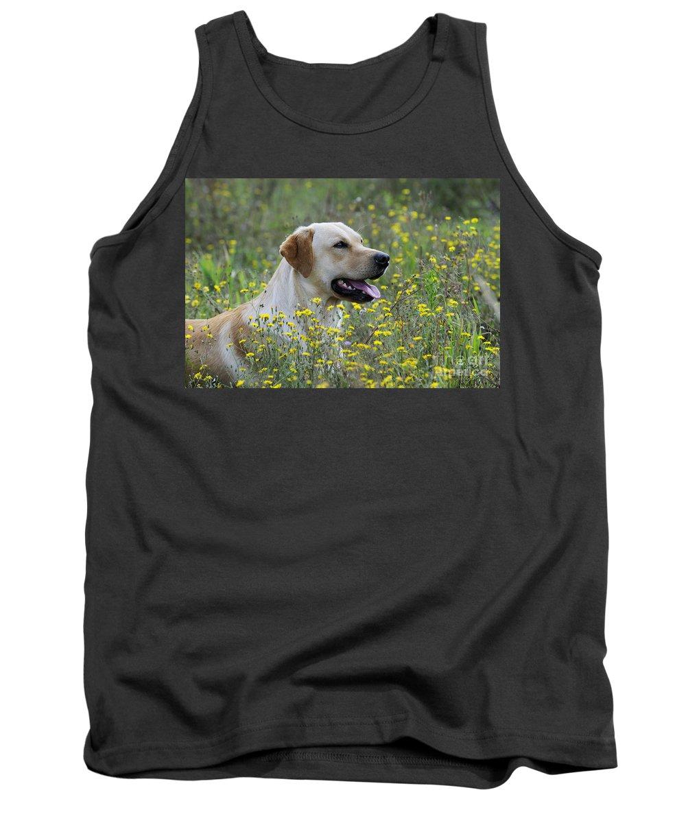 Labrador Retriever Tank Top featuring the photograph Labrador Retriever Dog by John Daniels
