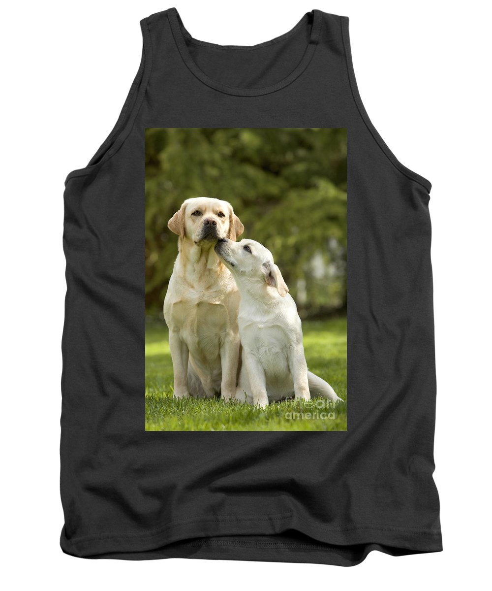 Labrador Retriever Tank Top featuring the photograph Labradors, Adult And Young by Jean-Michel Labat