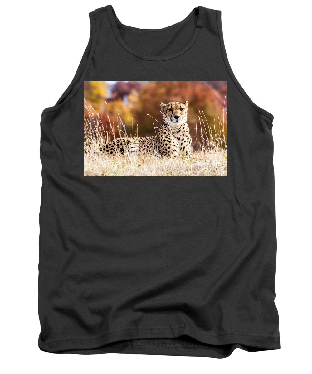 Kc Zoo Photograph Tank Top featuring the photograph Leopard Watching by Terri Morris