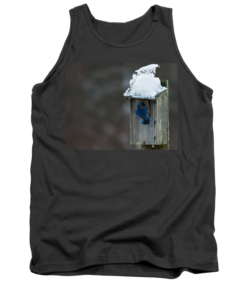 Bluebird Tank Top featuring the photograph Let Me In Its Cold by Scott Hafer