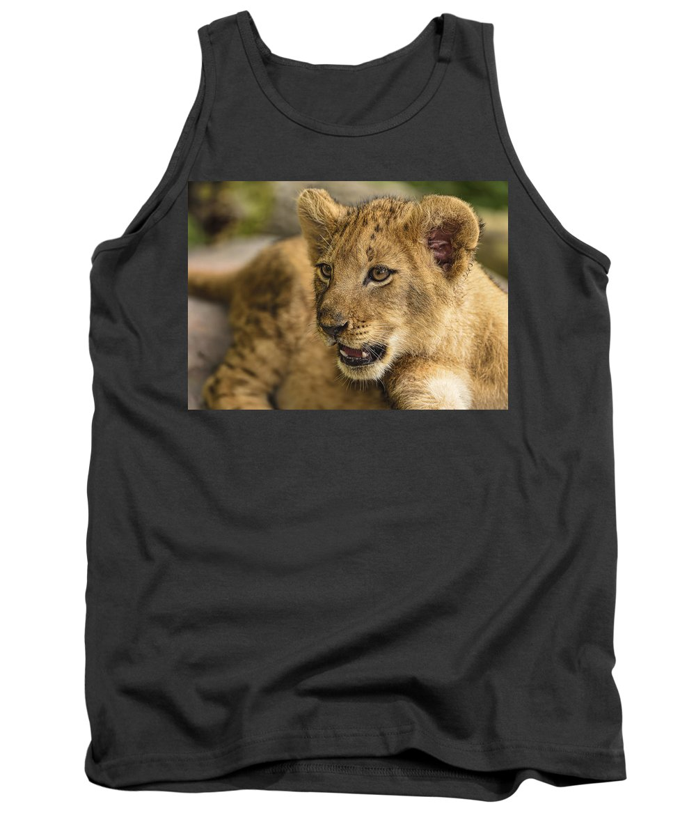 Dodsworth Tank Top featuring the photograph Lion Cub Close Up by Bill Dodsworth