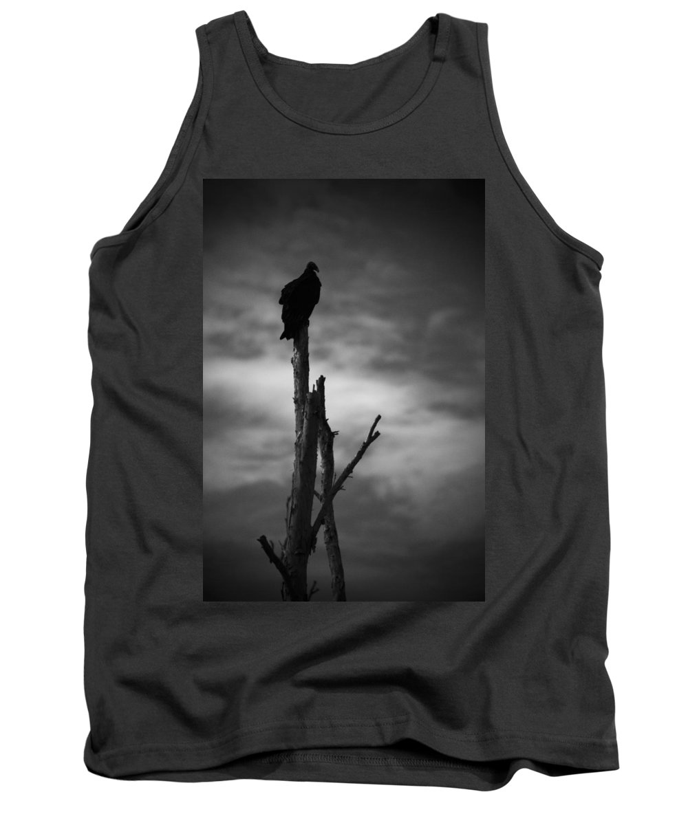 Florida Tank Top featuring the photograph Lone Vulture by Bradley R Youngberg