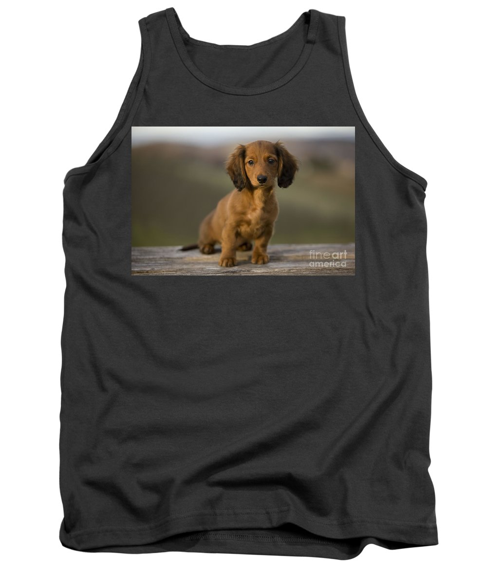 Long-haired Dachshund Tank Top featuring the photograph Long-haired Dachshund Puppy by Jean-Michel Labat