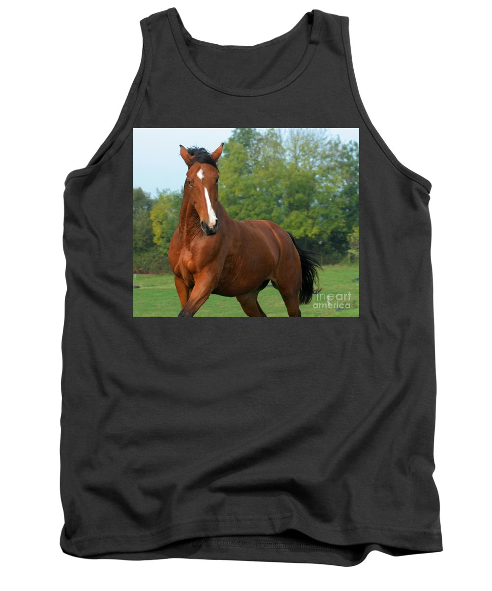 Horse Tank Top featuring the photograph Look How Pretty I Am by Angel Tarantella