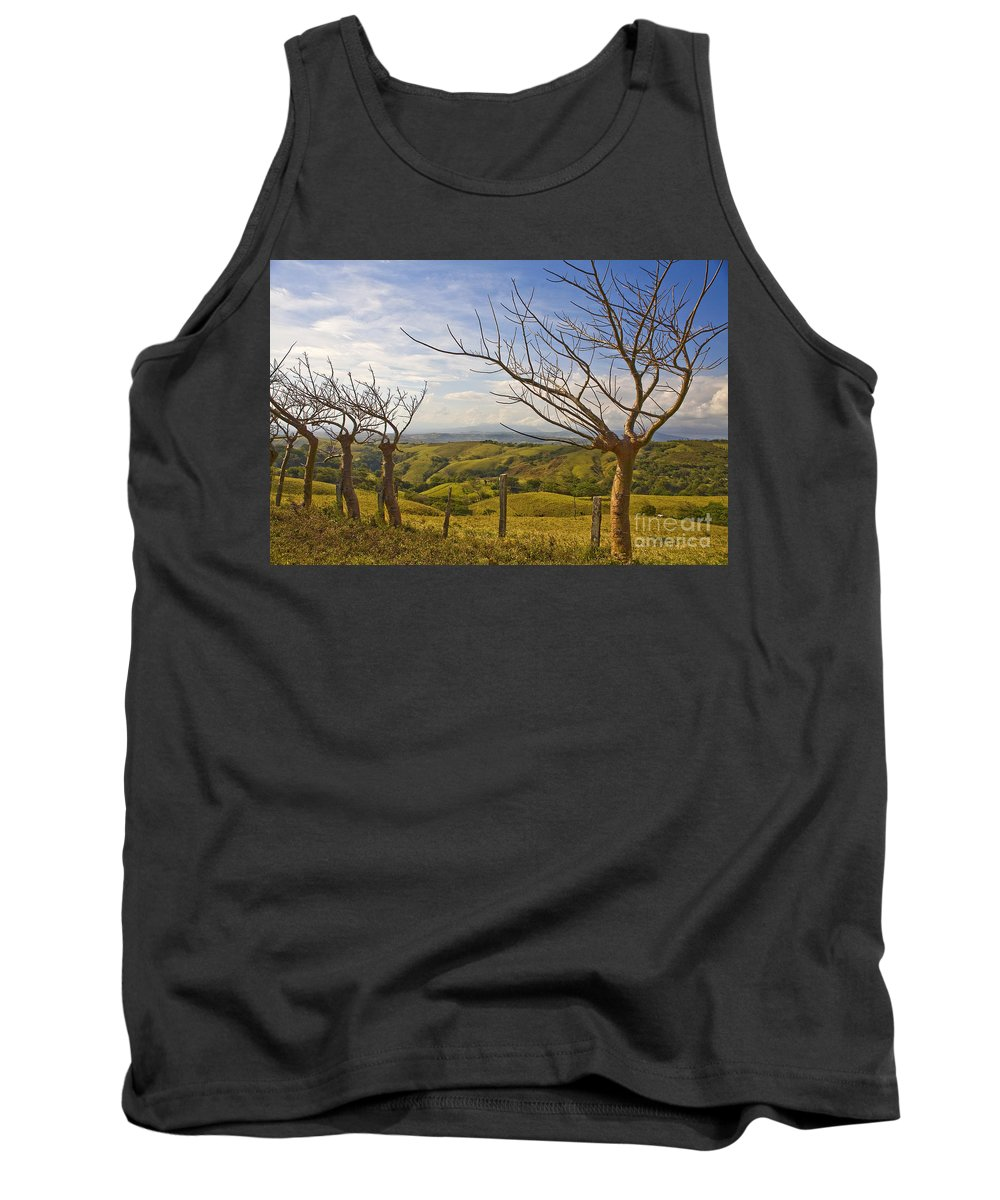 Landscape Tank Top featuring the photograph Lush Land Leafless Trees 2 by Madeline Ellis