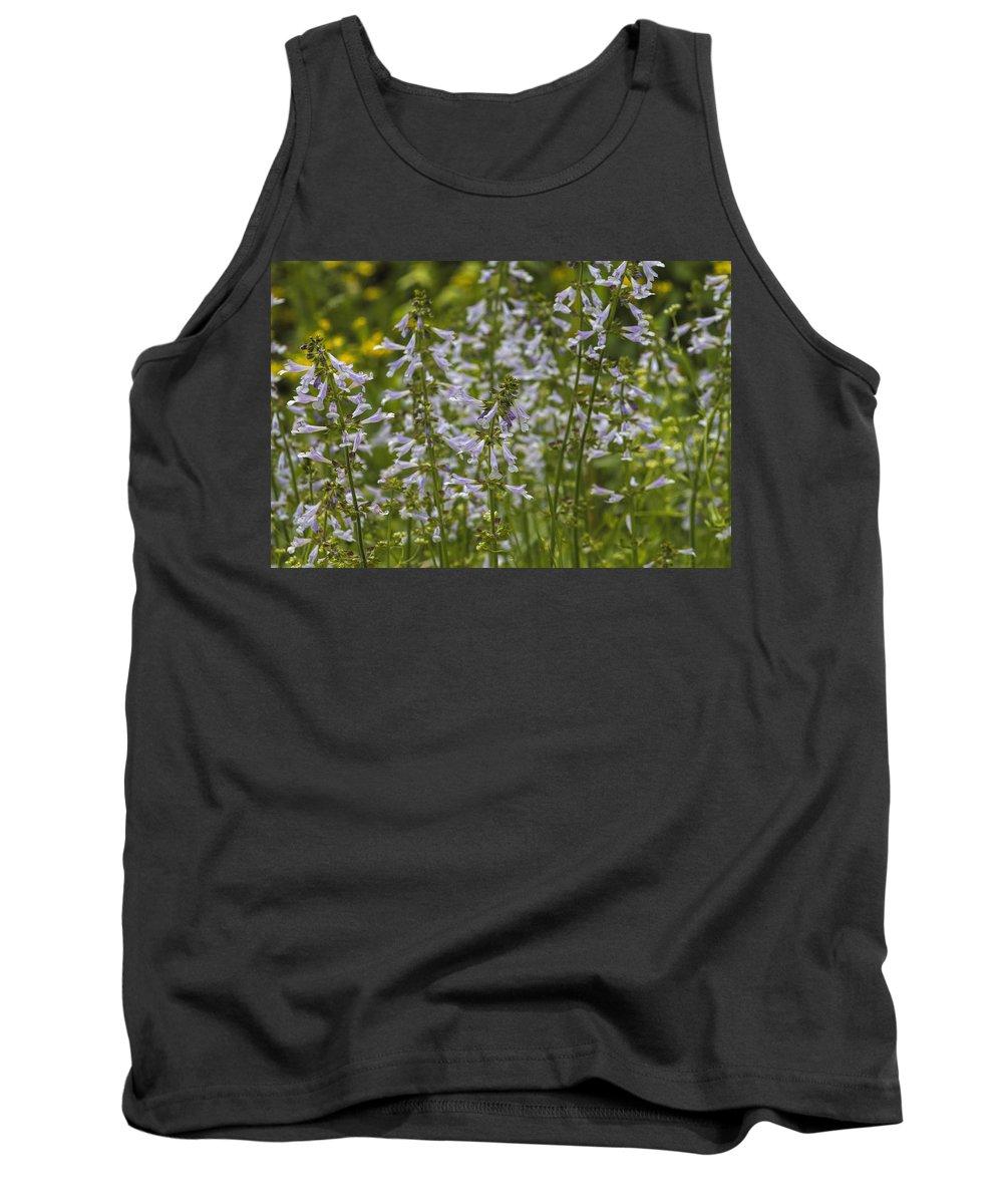 Lyreleaf Sage Tank Top featuring the photograph Lyreleaf Sage Wildflowers - Salvia Lyrata by Kathy Clark