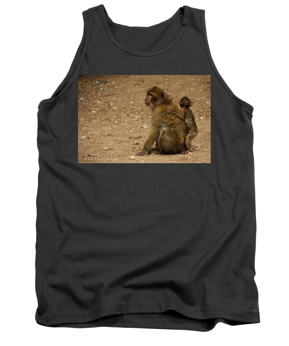 Animal Tank Top featuring the photograph Macaque Monkeys by Ivan Slosar