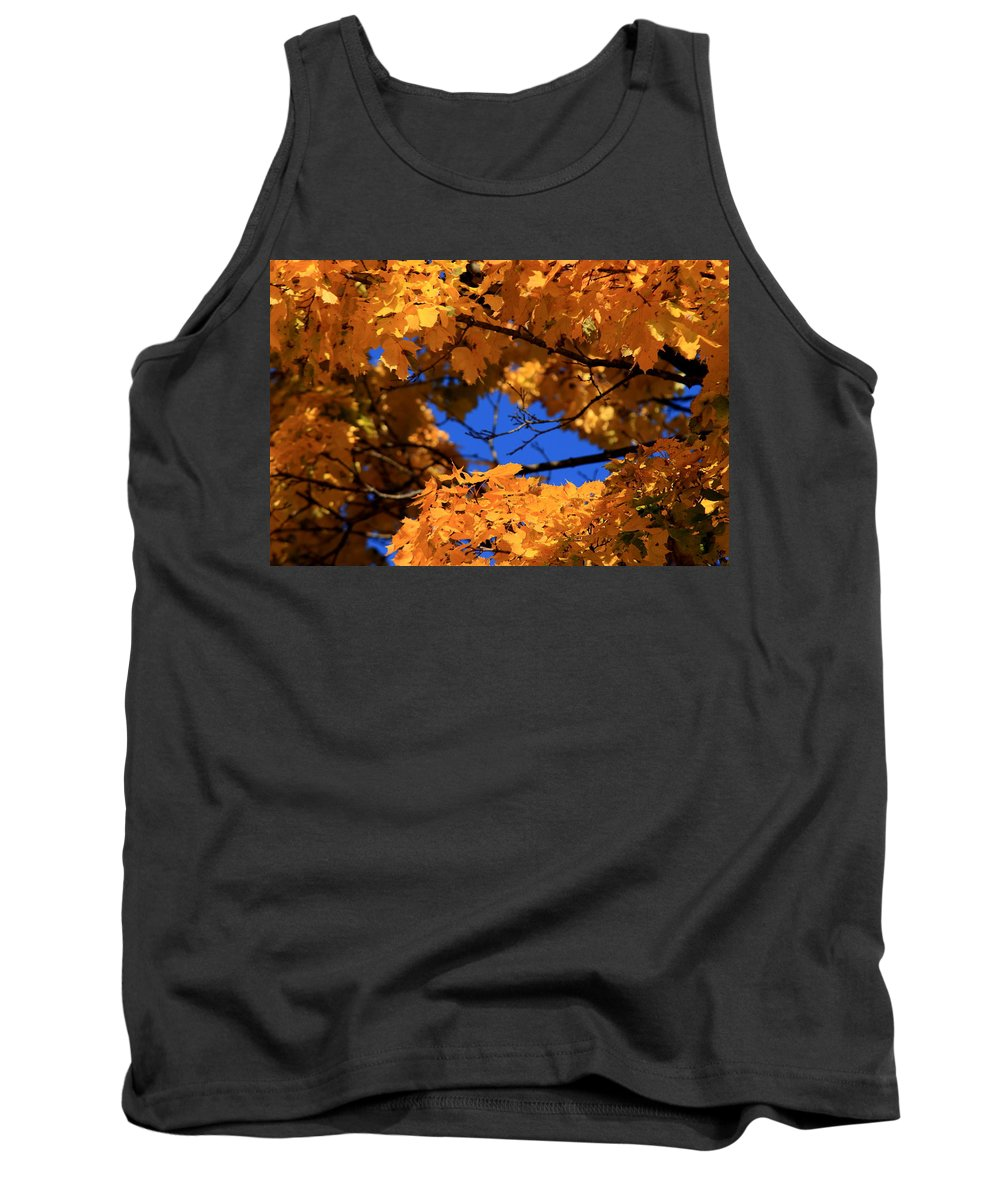 Maple Tank Top featuring the photograph Maple Tree In Autumn by David Dufresne