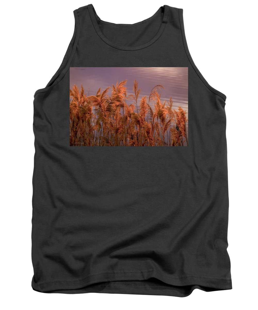 Marsh Reeds Tank Top featuring the photograph Marsh Reeds Aglow - 150218a-162 by Albert Seger