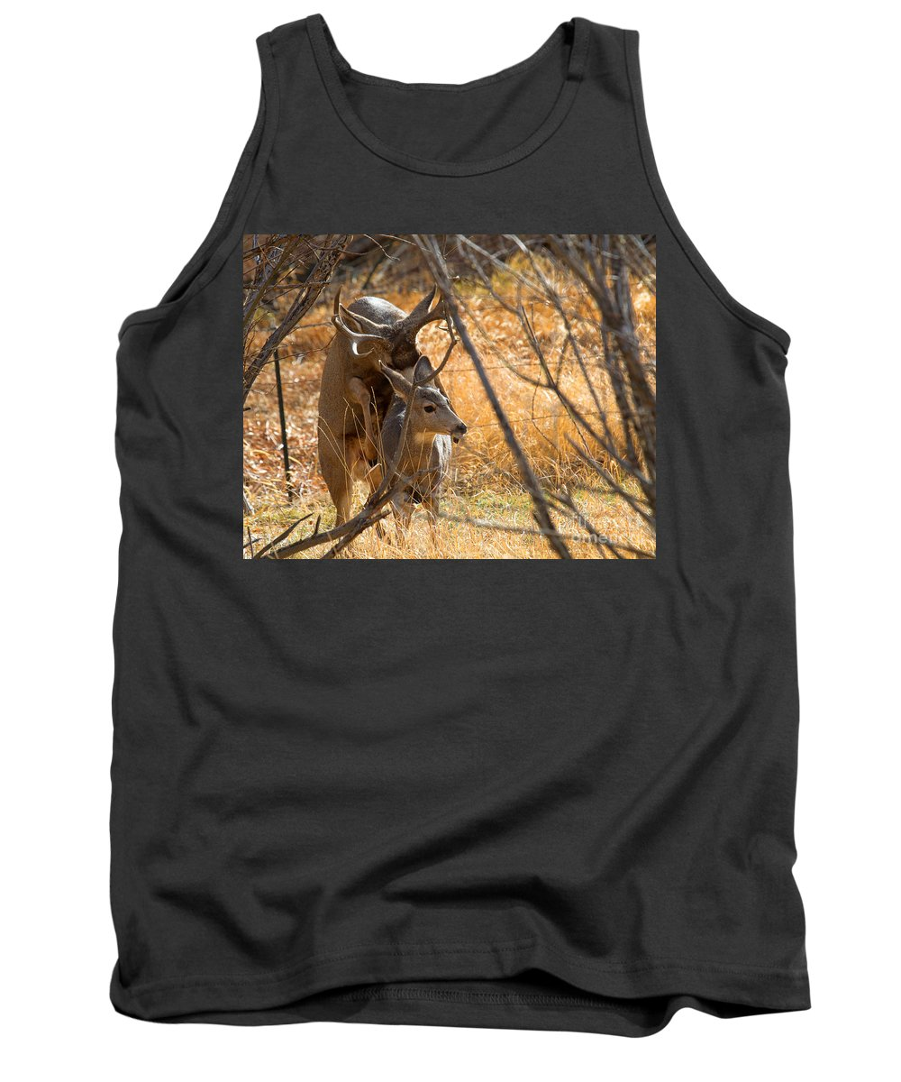 Mating Deer Tank Top featuring the photograph Mating Mulies by Jim Garrison