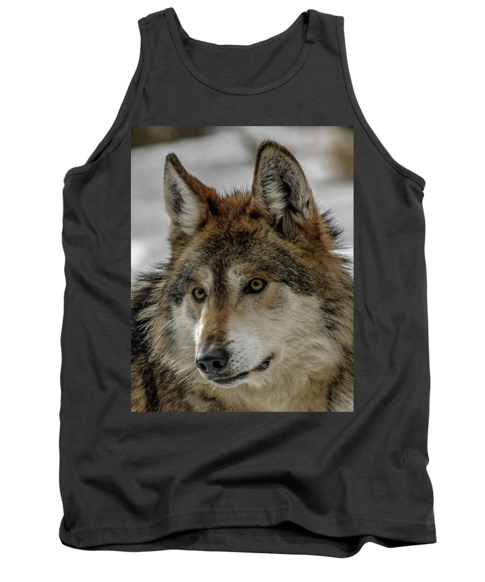 Wolf Tank Top featuring the photograph Mexican Grey Wolf Upclose by Ernie Echols
